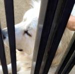 久しぶりに近所の老犬ペアに会えた。モフモフ三昧で少し和む。