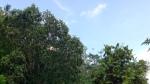 ジャングルでハイ・ティー